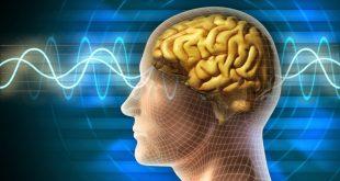 Một lý thuyết mới cho rằng ý thức không tồn tại trong cũng không gian với não bộ. (Ảnh: iyakan.com)